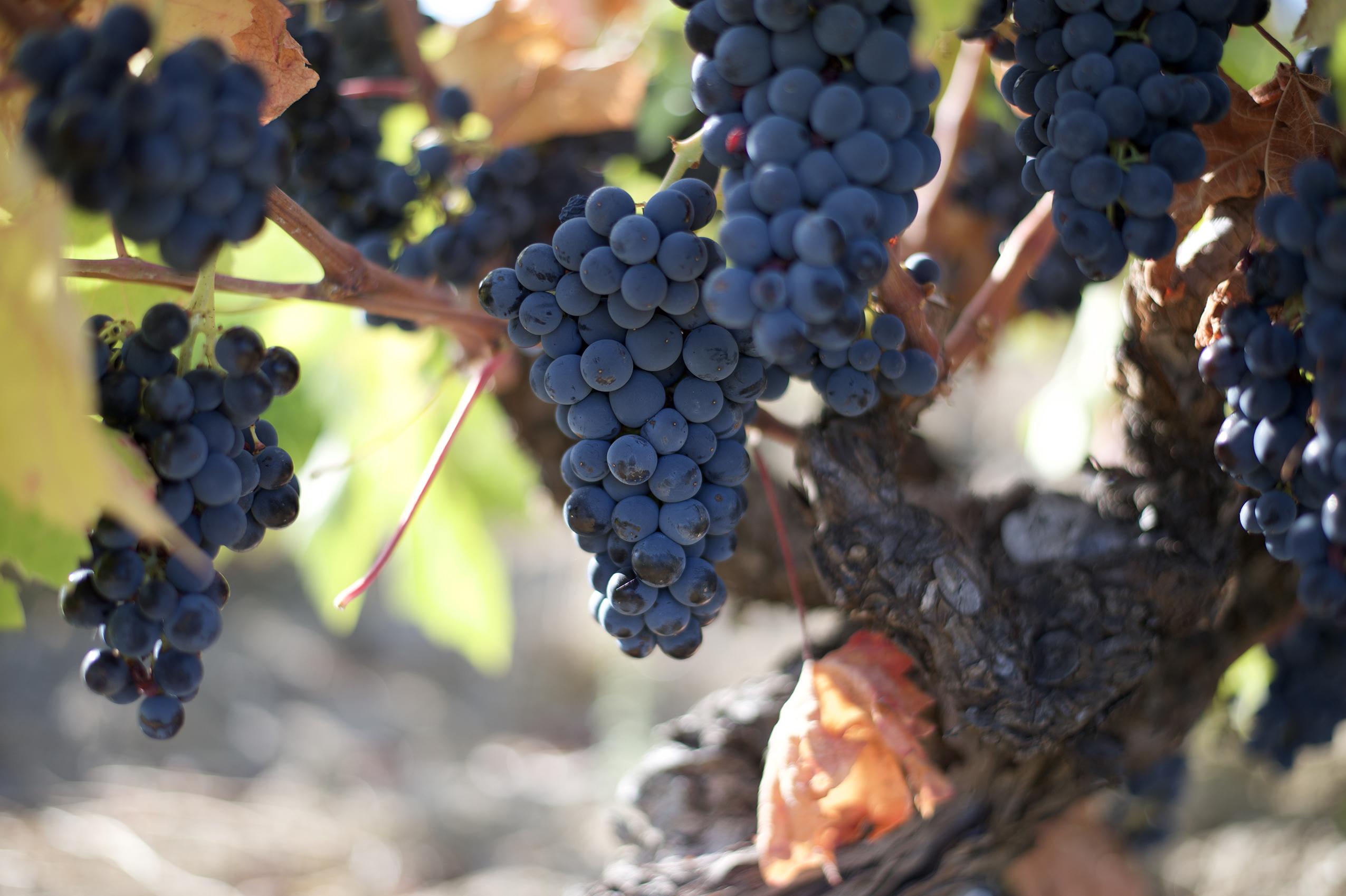 Conoce las 9 bodegas que forman parte de la Ruta del Vino de Arribes